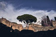 ostia (paulopar.rodrigues) Tags: local exterior italia photofoto captureone color fuji xt1 ostiaantica naturenatureza árvore tree roma
