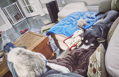 Hanging out with the animals... Sorry for the mess but it's really their mess, not mine. (Jonmikel & Kat-YSNP) Tags: dog sofa cat relaxing pets