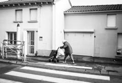 Passage piéton (herbdolphy) Tags: analog analogique argentique pellicule 35mm film pentaxmx pentax noiretblanc blackwhite kodak tmax100 filmisnotdead filmphotography