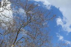 Hike to Château de Menthon, Rochers des Moillats & Ermitage de Saint-Germain (*_*) Tags: 2019 printemps spring april afternoon europe france hautesavoie 74 annecy menthonsaintbernard savoie bornes hiking mountain montagne nature randonnee walk marche