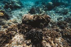 GOPV25143 (waychen_c) Tags: philippines ph visayas centralvisayas bohol provinceofbohol balicasag balicasagisland seascape coralreef coral fish tropicalfish cebutour2019 gopro goprohero7black 菲律賓 維薩亞斯 維薩亞斯群島 中維薩亞斯 保和 保和省 巴里卡薩 巴里卡薩島 保和海 珊瑚礁 珊瑚 熱帶魚 2019宿霧旅行 南洋 boholsea sea