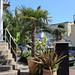 Hotel Palms, Torquay
