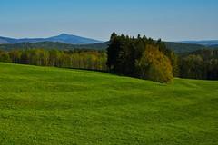 Frühlingsgrün (lebastian) Tags: panasonic dmcgx8 olympus m1240mm f28 landschaft landscape grün wiese bäume wald aussicht