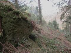Brimpts Rocks (looking down hill) SX 6725 7468 (Bridgemarker Tim) Tags: lesserknowntors dartmoor brimpts eastdart