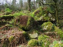 Brimpts Rocks at the riverside (Bridgemarker Tim) Tags: lesserknowntors dartmoor brimpts eastdart