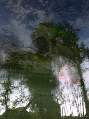 Wet Bang (andressolo) Tags: reflection reflections reflect reflejos river río tea trees water agua abstracto abstract nature