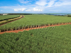 Alf Ribeiro 0282-172 (Alf Ribeiro) Tags: agribusiness agriculture brazil brazilian ethanol fuel rural saopaulo aerial agricultural background bio business cane cellulose cropland drone ecology energy environment farm farming farmland field foliage food fresh green grow healthy industry land landscape leaf natural nature organic plant plantation production road row sky stem sugar sugarcane sweet travel tropical view