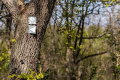 Canon EOS R_100-IMG_0665 - 21. April 2019 (Hygeliak) Tags: 2019 canoneosr ostern planart1450ze zeiss thüringen burggleichen dreigleichen