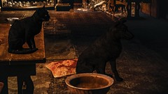The Witcher 3: Wild Hunt (Graff Metal) Tags: thewitcher3wildhunt game theblackcatanddog the black cat dog