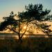 Sonnenuntergang am Peenestrom