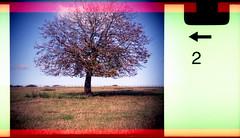 horse chestnut (pho-Tony) Tags: 110 treehorsechestnut clowncamera expiredfilm toycameras novelty clown camera toy expired fujicolor superia iso 200 film tetenal c41