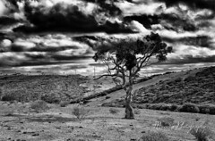 Distance Future B&W (Manni750) Tags: disance future tree windmill renewable energy sky clouds dramatic country rural rapid bay south australia blackwhite