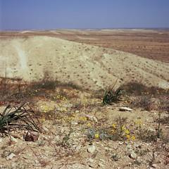 desert (erik.drost) Tags: hasselblad500cm hasselblad planart2880 zeissplanar8028 fujivelvia100 negev desert slidefilm slides chrome 6x6