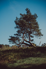 against the wind   l   2019 (weddelbrooklyn) Tags: natur landschaft heidelandschaft baum bäume wandern hügel frühling schleswigholstein nikon d5200 treckingtour hiking nature landscapes germany northerngermany tree trees moorland hills spring