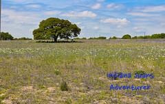 Texas field. (Indiana Juans) Tags: field texas indianajuans explorer adventurer bluesky clouds trees flowers beautifulday sunnyday