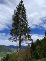 Baum mit Aussicht (Priska B.) Tags: baum aussicht burgenberg frühling schweiz switzerland swiss svizzera nidwalden zentralschweiz innerschweiz