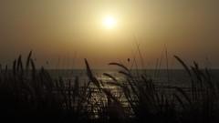 Sunset (unicorn7unicorn) Tags: закат море растение wah солнце парус israel 365the2019edition 3652019 day114365 24apr19