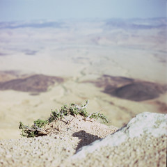 holding on (erik.drost) Tags: mitzperamon israel hasselblad500cm planart2880 zeissplanar8028 fujivelvia100 desert