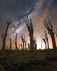Petrified trees (astropolo_) Tags: milkyway night nightphotography southamerica sky stars clouds trees argentina space nightscape landscape nature ruins cloudscape dark nebula