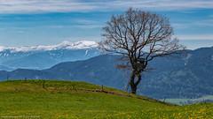Wander Ostern 2019 (Bikerwolferl) Tags: mountain nature landscape europeanalps tree scenics outdoors hill beautyinnature ruralscene berg natur landschaft alpen baum wiese landschaftspanorama anhöhe ländlichesmotiv