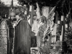 20190304-0538-Edit (www.cjo.info) Tags: 1830s 1836 19thcentury bw england europe europeanunion lambeth london m43 magnificent7 magnificentseven magnificentsevengardencemeteries microfourthirds nikcollection olympus olympuspenfgzuikoautos40mmf14 olympuspenf penfmount silverefexpro silverefexpro2 southmetropolitancemetery unitedkingdom westnorwood westnorwoodcemetery westerneurope angel animal art blackwhite blackandwhite blur bokeh carving cemetery cross decay digital fauna flora focusblur girl gravegraveyard manualfocus monochrome mythicalcreatures overgrown people plant sculpture shallowdepthoffield statue stone stonework wingedcreature woman
