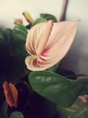 flower #motoz3play #portrait #beautiful #pmw #Brazil (fernandamarinhoh) Tags: beautiful motoz3play brazil pmw portrait