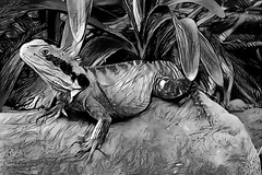 Only I can change my life. No one can do it for me. (Carol Burnett) (boeckli) Tags: 01159 rx100m6 ddg deepdreamgenerator textures texturen texture textur outdoor australia waterdragon reptile reptil tier tiere animals monochrome blackwhite blackandwhite schwarzweiss
