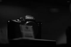 test Sony Alpha 7 III + sony FE 135mm F1.8 GM (JLpictsArt's) Tags: sony alpha 7 iii fe 135mm f18 gm