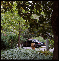 Around the neighbourhood . (Brjann.com) Tags: typical kodak portra 160 kodakfilm hasselblad 6x6 cars car typography newtopographic topographic toronto ontario canada vintage jaguar trees green film analog 120 120film kp160