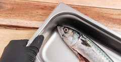 Mackerel (annick vanderschelden) Tags: mackerel fish food protein gutted recipient stainlesssteel kitchen blackboard chalk word plank wood culinary foodsafe cooled storage hand belgium