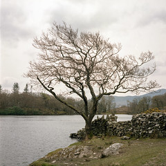 Alone (Howie Mudge LRPS BPE1*) Tags: tree wall lake llyncynwch moody overcast sky trees mamiyac220professional kodakportra160 epsonv800 analog analogphotography 6x6 squareformat 120film tlr twinlensreflex film filmisnotdead filmcamera filmrevival landscape nature travel adventure gwynedd wales cymru uk