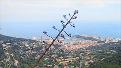 Monaco et Monte-Carlo vus de la Turbie.