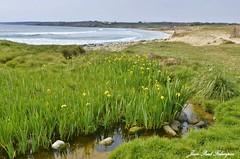 Printemps -  Anse du Cabestan / Cap Sizun (jean-paul Falempin) Tags: mer cap paysage nikon passion
