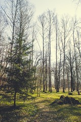 Spring in the forest (oksanamaselko) Tags: nature flowers mood april forest inspiration cozy photographer nikon sunny springtime
