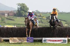 DSC_0671 (michael_walton1) Tags: nikon d500 sigma 150600c 55300 eytononsevern horse horseracing horses pointtopoint p2p