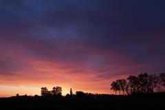 A l'orée du bois de Hal, 6h17 du matin (pogona) Tags: 7d canon7d markii 24105mm boisdehal sunrise leverdesoleil paysage landscape couleurs arbre tree silhouette tdb thierrydebleye pogona