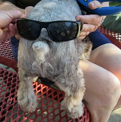 DogButtFace (FolsomNatural) Tags: dog butt face spoof satire duckdynasty sunglasses