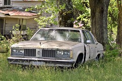 Hey!  I'm Only in My Thirties (donnacurrall) Tags: oldsmobile old car 1980's abandoned wrecked rusty dented grass trees