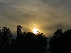 Sun Falling Behind The Trees. (dccradio) Tags: lumberton nc northcarolina robesoncounty outdoor outdoors outside nature natural tree trees leaf leaves foliage plant sky april spring springtime thursday thursdayevening evening goodevening canon powershot elph 520hs treebranch branch branches treebranches treelimb sunset settingsun silhouette yellowsky sun sunlight sunshine