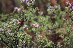 (MegachromeImages) Tags: arizona az sedona mountain statepark redrock wildflower skyline
