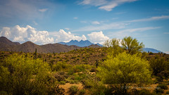 Observed By The Peaks (playful_i) Tags: apachejunction fourpeaks saguarolake cactus clouds desert mountain saguaros tree weather