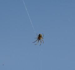 Spider strategy (giorgiorodano46) Tags: aprile2019 april 2019 giorgiorodano italy ragno spider