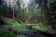 Forest (martha hoo) Tags: forest wald bayern landscape landschaft natur nature water wasser sony sonyalpha