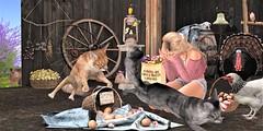 Just for fun (Dora 4S) Tags: nutmeg rkkn cats easter eggs farm jesspose p poses jian ariskea truth tlc