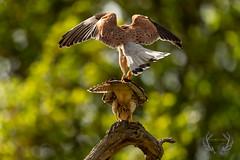 20190426-D4S_4140 (1wildshot) Tags: nikond4s natureza wildlifephoto bird birds ptaki natura