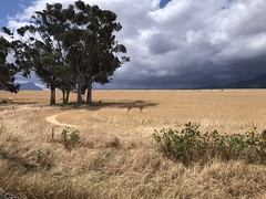 Journey through the Cape (shanahands2) Tags: cape crops stormclouds trees iphone south africa westerncape
