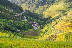 _Y2U2688.0918.La Pán Tẩn.Mù Cang Chải.Yên Bái (hoanglongphoto) Tags: asia asian vietnam northvietnam northwestvietnam landscape scenery vietnamlandscape vietnamscene morning sunlight sunny sunnymorning terraces terracedfields terracedfieldslandscapeinvetnam terracedfieldsinvietnam flanksmountain valley hillside pass road canon canoneos1dx tâybắc yênbái mùcangchải lapántẩn phongcảnh ruộngbậcthang buổisáng nắng nắngsớm lúachín mùagặt harvest thunglũng sườnnúi sườnđồi ruộngbậcthangmùcangchải mùagặtmùcangchải lúachínmùcangchải conđường đèo ql32 northernvietnam mùcangchảimùagặt mùcangchảimùalúachín canonef2470mmf28liiusm