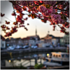 Lente in Oute Tonge (LeonardoDaQuirm) Tags: oudetonge port volkerak boat spring lente frühling boot haven hafen kolk kom village dorp dorf tree baum blossoms blüten bloem boom rhein rijn delta krammer