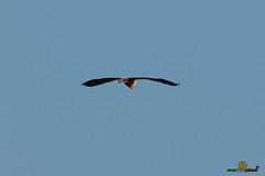 A-LUR_5842 (OrNeSsInA) Tags: aly passignano panicale natura panorami campagma campagna landescape trasimeno nikon canon airone airon cormorano spettacolo birdwatching albero cielo animale mare acqua uccello