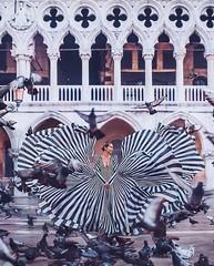 Venice (hobopeeba) Tags: beautiful travel photos